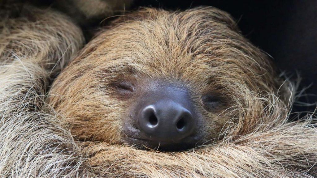 """微软发布""""Sloths PREMIUM(树懒高级版)""""4K壁纸包"""