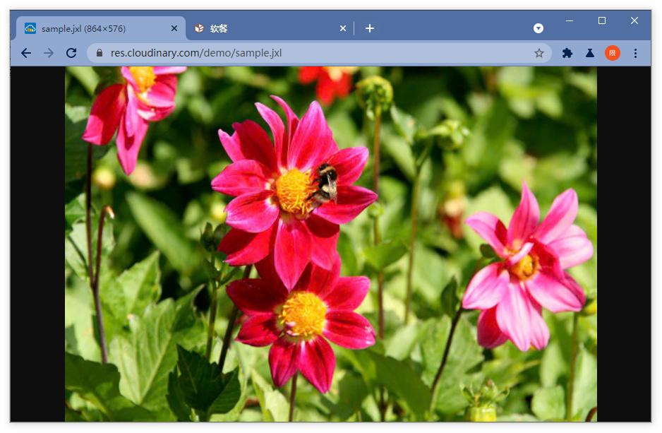 这样设置,让浏览器支持下一代主流图片格式JPEG XL