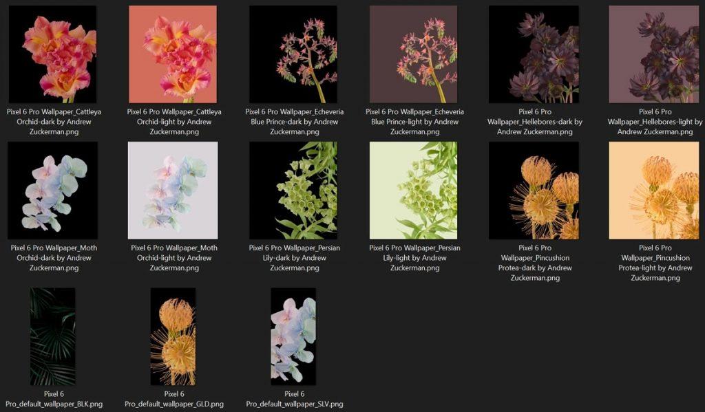 [下载]Pixel 6 Pro发布日益临近,植物主题壁纸曝光